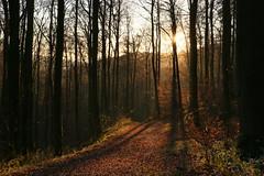 Herbstspaziergang (jrgenwarneke) Tags: wald landschaft outdoor herbst autmn autumn