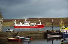 Stephanie M (IMG_0020mod) (AngusInShetland) Tags: fishingboat lerwick shetland scotland haysdock stephaniem kilkeel n718 northernireland lk271 pilotus canoscan5600f agfavistaplus agfa poundland 35mm dynax minolta maxxum minoltadynax7000i