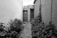 Garden Path (lukemarkof) Tags: outdoor leica style depth melbourne challenging interest city fun shadow funky australia classic play art brunswick black exposure view special light dark exotic plant blackandwhite
