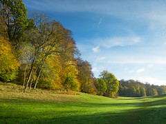 PS653_GPT8401.jpg (Graeme Terry) Tags: ashridgeestate autumn england goldenvalley nationaltrust plants ashridge woodland trees locations littlegaddesden unitedkingdom gb