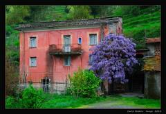 House with wistaria (cienne45) Tags: our italy abandoned colors casa liguria cienne45 carlonatale ne natale in wistaria glicine abbandonato supershot flickrdiamond 103366 valgraveglia spiritofphotography