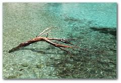 Bois flotté - Driftwood (afer92 (busy)) Tags: sea mer tree water creek eau driftwood avril cassis arbre emerald printemps 2012 calanque blueribbonwinner envau 9191 sooc boisflotté émeraude
