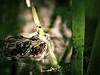 Toads (iBoyles) Tags: macro closeup photoshop nikon bravo texas searchthebest sigma amphibian frog explore adobe toad handheld dfw lightroom 1530 naturesfinest magicdonkey flickrsbest specnature anawesomeshot bratanesque d7000