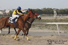 حصان - Horse 2 (Mazen_Alghamdi) Tags: canon 75300 mazen مسابقة سباق حصان 550d الخيل كانون خيول الغامدي مازن الجبيل alghamdi الصناعية احصنة