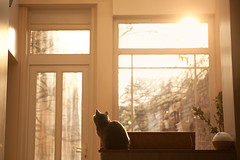 BLACK CAT JOHN BROWN (Aurlien Buttin) Tags: city winter light sunset urban sun house france hot window girl sunshine sex cat canon nude women europe pretty raw north explore porn amiens picardie 5dmarkii 5dii