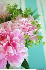 A Peony Bouquet from my Garden (Angela @ Cottage Magpie) Tags: pink flowers bouquet peonies ladysmantle