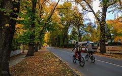Autumn Colours in Arrowtown (Robert Brienza) Tags: street autumn newzealand bike kids scenic wideangle southisland arrowtown fallcolours wideanglelens canon1022mm 2013 canon7d
