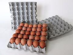 แผงไข่กระดาษ ถาดไข่กระดาษ pulp mold eggtray-4