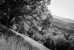 cling to the outside of the earth (Super G) Tags: california trees blackandwhite bw grass landscape unitedstates hills flare sunol ifwedonthangonwellflyrightoff