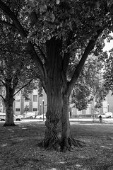 Tree (ben.bibikov) Tags: park tree downtown fuji boise fujifilm xe1