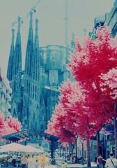 (santisss) Tags: barcelona mamiya ir 50mm kodak fil infrared ektachrome naranja 25mm eir filtro infraredfilm infraredcolor bw099 nc1000s