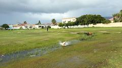 Jess sure does love water (Blyzz) Tags: wet water grass river labrador dive running retriever jess splashing flickrandroidapp:filter=none