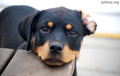 Filhotes de cachorros 09