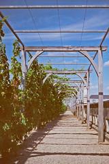 Villandry (bara brab) Tags: frankreich pflanzen architektur schloss garten villandry spalier