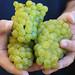 Jordan Harvest 2013 Blessing of the grapes 3.jpg
