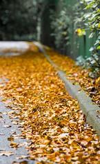 Orange leaves (chrispenfold) Tags: park autumn orange leaves leaf sthelens sherdley sherdleypark