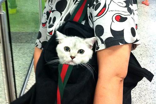 Hong Kong Cat in a Bag