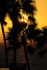 PDR990 (mcshots) Tags: ocean california autumn sunset sea usa sun beach water palms coast stock palmtrees mcshots playadelrey losangelescounty