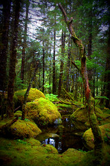 Enchanted Forest (Anna E. Cramer) Tags: home nature alaska forest landscape photography moss gnome woods juneau enchanted