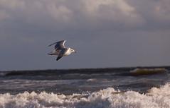 IMG_2997 (Felix Neumann) Tags: beach strand denmark dänemark danmark nordsee blavand northsee blåvand