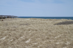 Drygrass Dunes (brucetopher) Tags: ocean sea seascape beach water bay coast spring sand dunes dune atlantic shore beaches coastline fo atlanticocean bodiesofwater saltwater wishing beachgrass capecodbay changeofseason thinkspring welcomespring signesofspring