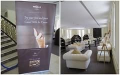 Het Majlis Café (MTTAdventures) Tags: café milk interior camel majlis