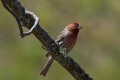 birds-7845