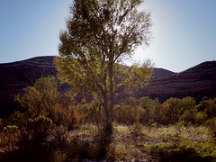 late afternoon, lower TAPCo (EllenJo) Tags: pentaxqs1 october17 2016 ellenjo ellenjoroberts pentax lowertapco verderiver lacustriancliffs clarkdale riparian lateafternoon autumninaz
