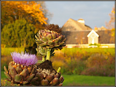 In the Garden of Ewsum (Michiel Thomas) Tags: gardenofewsum gardenofeden ewsum middelstum groningen holland