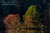 The Island (4) (Shuggie!!) Tags: forest hdr landscape lochchon reflections scotland trees trossachs winter zenfolio karl williams karlwilliams