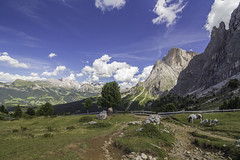 Panoramic view from Sassolungo (Bluesilver85) Tags: panoramic view sassolungo sassopiatto langkofel plattkofel valgardena valdifassa alpedisiusi hiking trail dolomites dolomiti alps landscape landscapes mountain mountains nature travel explore clouds odle giuliavitale