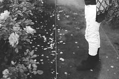 (Benz Doctolero) Tags: canon t50 50mm black white bw girls sacramento california kodak trix 400 film monochrome trees vegetation flowers