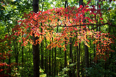 A walk in the jungle (Catch the dream) Tags: smokymountain fall fallcolors jungle mountain color vibrant tennessee nationalpark