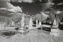 Cemetery (goodfella2459) Tags: nikon f4 af nikkor 24mm f28d lens ilford sfx 200 35mm black white film analog old cemetery moss vale tombstones hoya ir r72 filter infrared southern highlands new south wales milf