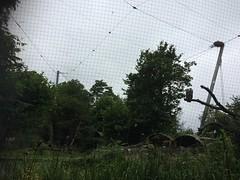 Planckendael, Mechelen - Belgium (TravelThor) Tags: zoo animal animals safari planckendael schwines horses ducks monkeys penguins travelthor turkey lion tiger hyena