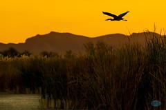 1113 IMG_9014 (JRmanNn) Tags: duckcreek sunrise lasvegas silhouette