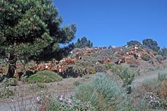 """Naturpark """"Sierra de Tejeda Almijara y Alhama"""" - Ziegenhirte (astroaxel) Tags: spanien andalusien canillas de albeida naturpark sierra tejeda almijara y alhama ziegen hirte"""