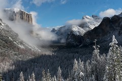 Tunnel View In White (Matt Grans Photography) Tags: yosemite tunnelview snow clouds fog trees outdoor landscape winter california valley mountains