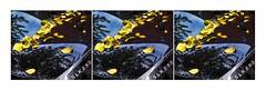 S-class (bob the bolder) Tags: uk durham car mercedes leaves autumn triptych artyfarty sss