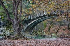 Autumn (.noctifer) Tags: bridge trees forest river leaves outdoor greece greek europe epirus fall autumn pindus ioannina land landscape water plant nature