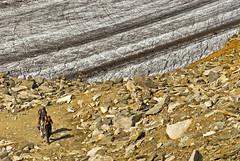 The glacier of the Aletch, Taken from the Eggishorn . Vue du glacier d'Aletsch depuis l'Eggishorn .   No. 0236. (Izakigur) Tags: alps alpes alpen glacierdaletsch glacier alpi valais wallis kantonwallis ch izakigur swiss suiza suisia suizo suïssa summer flickr switzerland schwyz nikon dieschweiz helvetia feel lasuisse musictomyeyes liberty lepetitprince europa europe svizzera myswitzerland sch