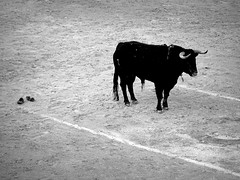 Morante de la Puebla (aficion2012) Tags: arles corrida goyesca goyesque septembre 2016 torero morante de la puebla matador france francia monochrome bw nb monotone toro zalzuendo toreau bull bullfight