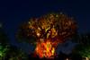 Tree of Life Lion King (lefthandm3dia) Tags: treeoflife animalkingdom disney waltdisneyworld disneyworld