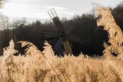 Old school grain (RazvanDuhan) Tags: outdoor d3300 field landscape wheat 1855mm 40mm nikon autumn peasant rural area