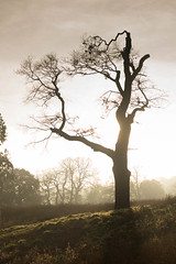 Dancing tree (Andy Cash) Tags: trenthamgradens trees 2016 andycash unitedkindom silhouette