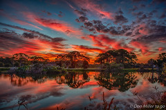 Fiery morning at the Rookery (DonMiller_ToGo) Tags: cloudsonfire cloudporn sunrise venicerookery hdrphotography nature reflection goldenhour skycandy panoimages2 florida hdr 5xp fireinthesky onawalk outdoors lake skypainter sky rookery clouds