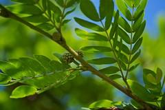 Leaves (Deb Jones1) Tags: green nature beauty leaves canon garden botanical outdoors leaf flora flickrawards debjones1