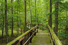 Big Hill Pond State Park (bhophotos) Tags: statepark travel trees usa green nature landscape geotagged nikon tennessee trail swamp boardwalk midsouth d80 2470mmf28g bighillpond bruceoakley bighiilpondstatepark