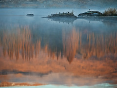 Butcher's Dam Reflection (Ian@NZFlickr) Tags: reflection birds golden dam central nz otago butchers poplars