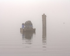 Floating Storage (Sarah Arquitt Photography) Tags: reflection bird fog canon photography photo washington pillar skagit pugetsound rebelxs festivaloffarms tamronsp70300mmf456divcusd azotaphotography